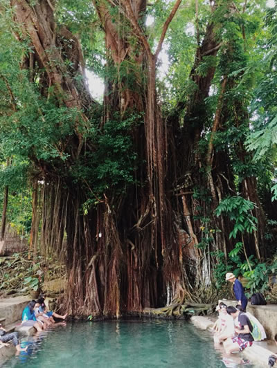 Century Old Balete Tree