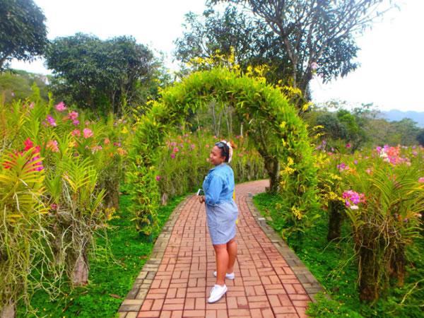 Michel Lhuillier's Flower Garden